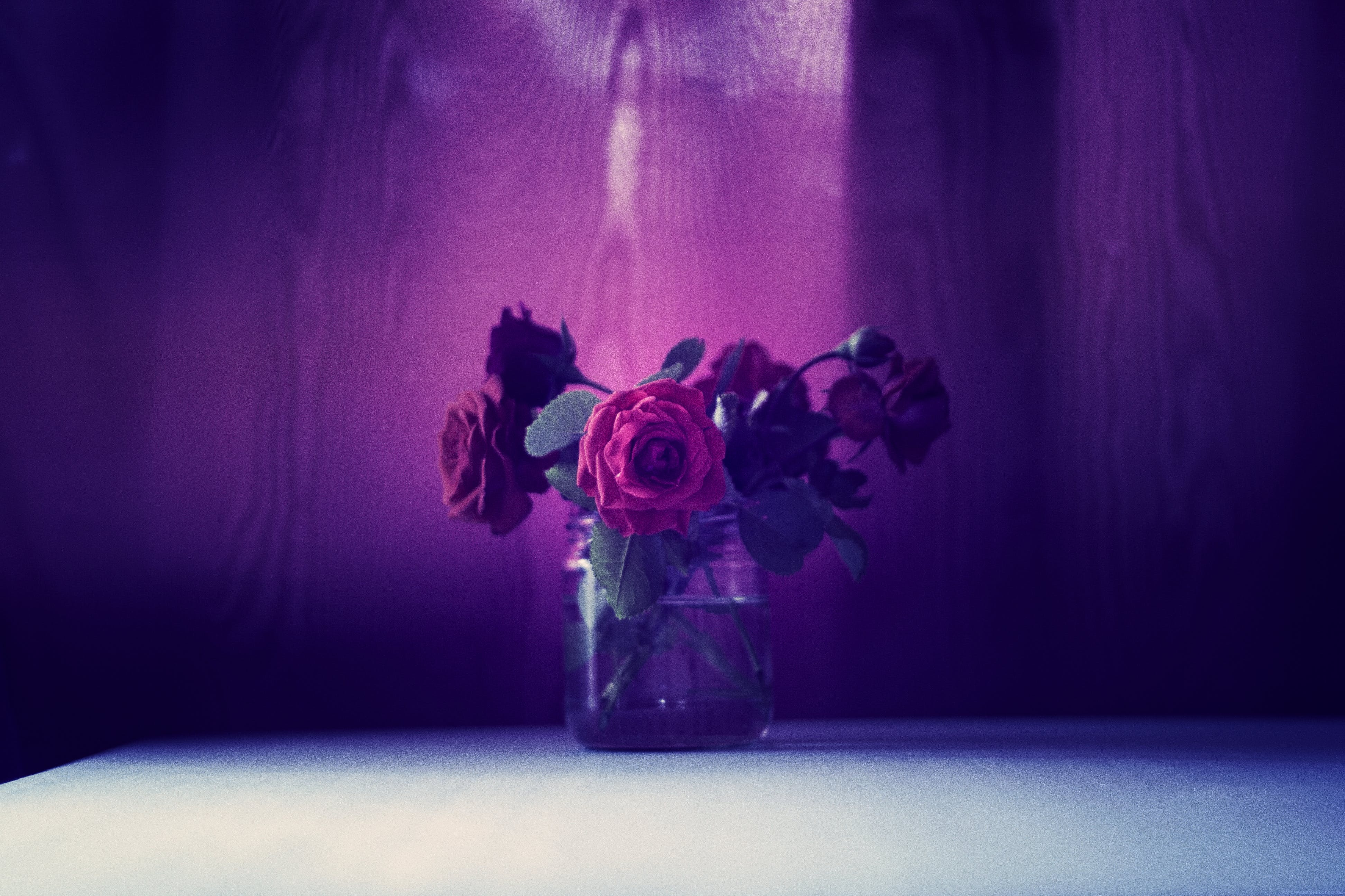 Photo of Red Roses on Clear Glass Jar
