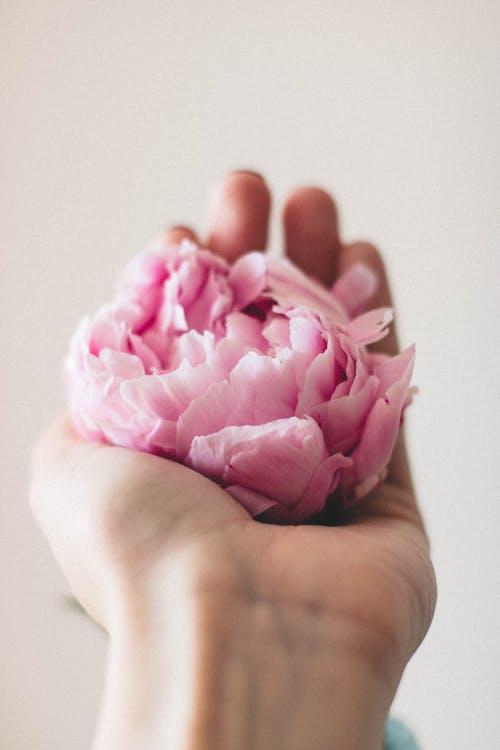 Foto stok gratis berkembang, bunga, flora, kelopak
