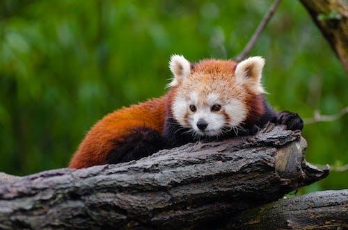 Foto stok gratis batang pohon, binatang, bulu, cute