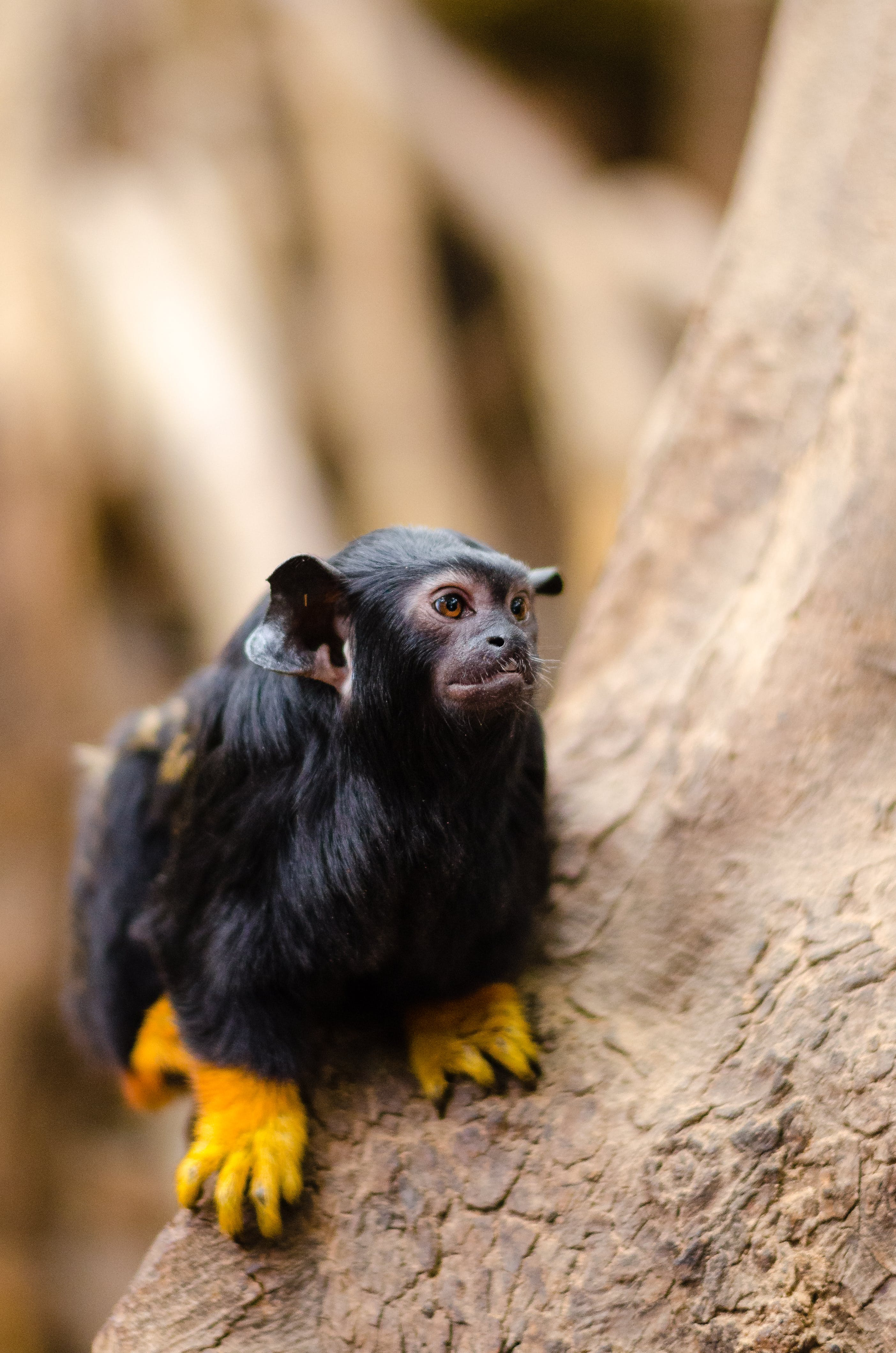Black Long Fur Animal With Yellow Claws on Tree Trunk during Day Time