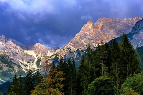 天性, 日光, 景觀, 森林 的 免費圖庫相片