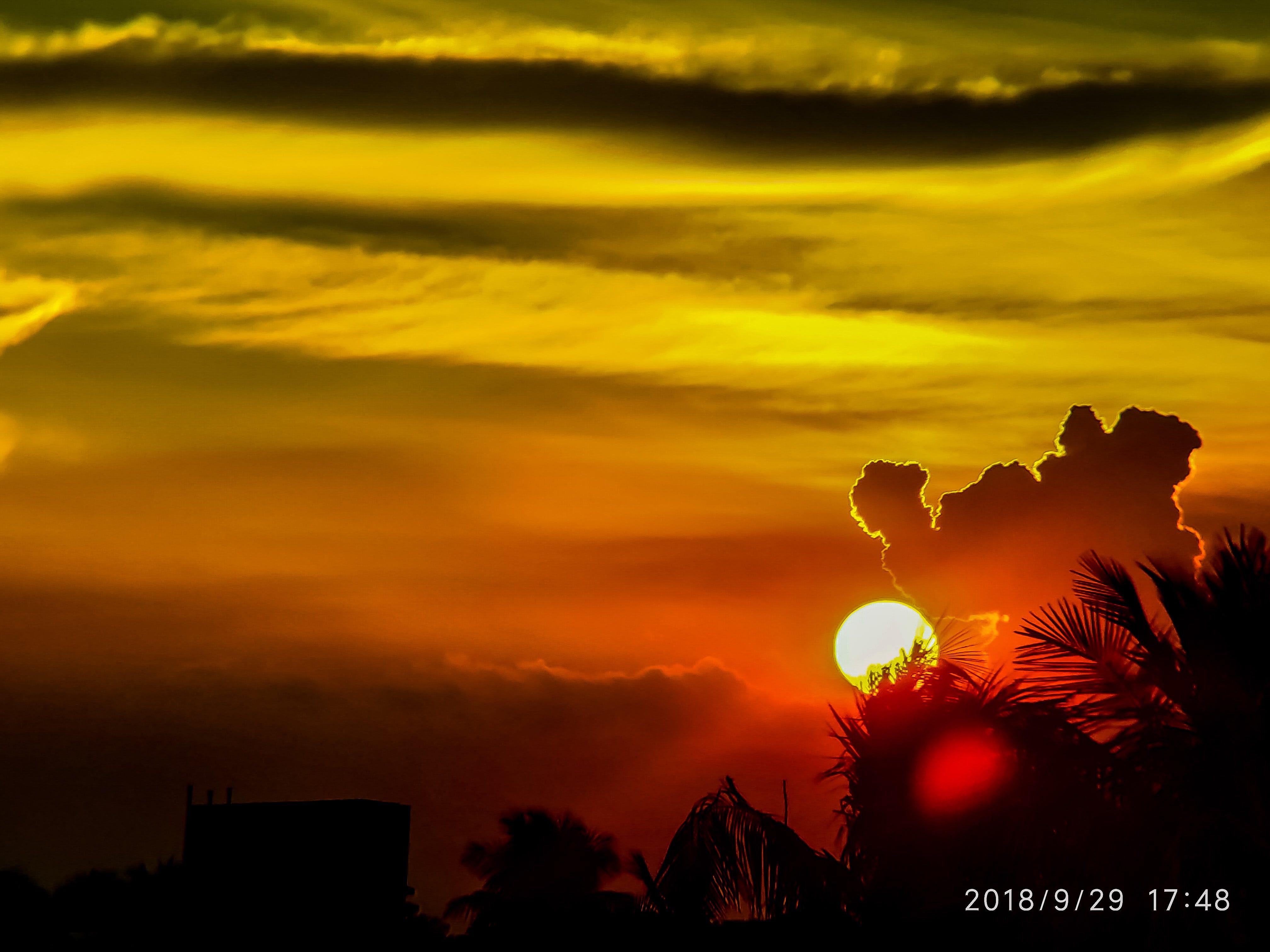 Free stock photo of sunset, Sunset through trees