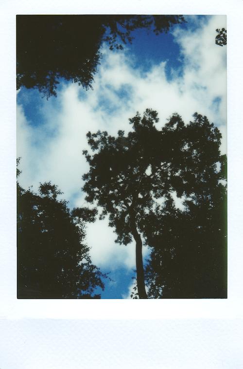 Imagine de stoc gratuită din arbori, clipă, film instantaneu, fotografie cu unghi mic