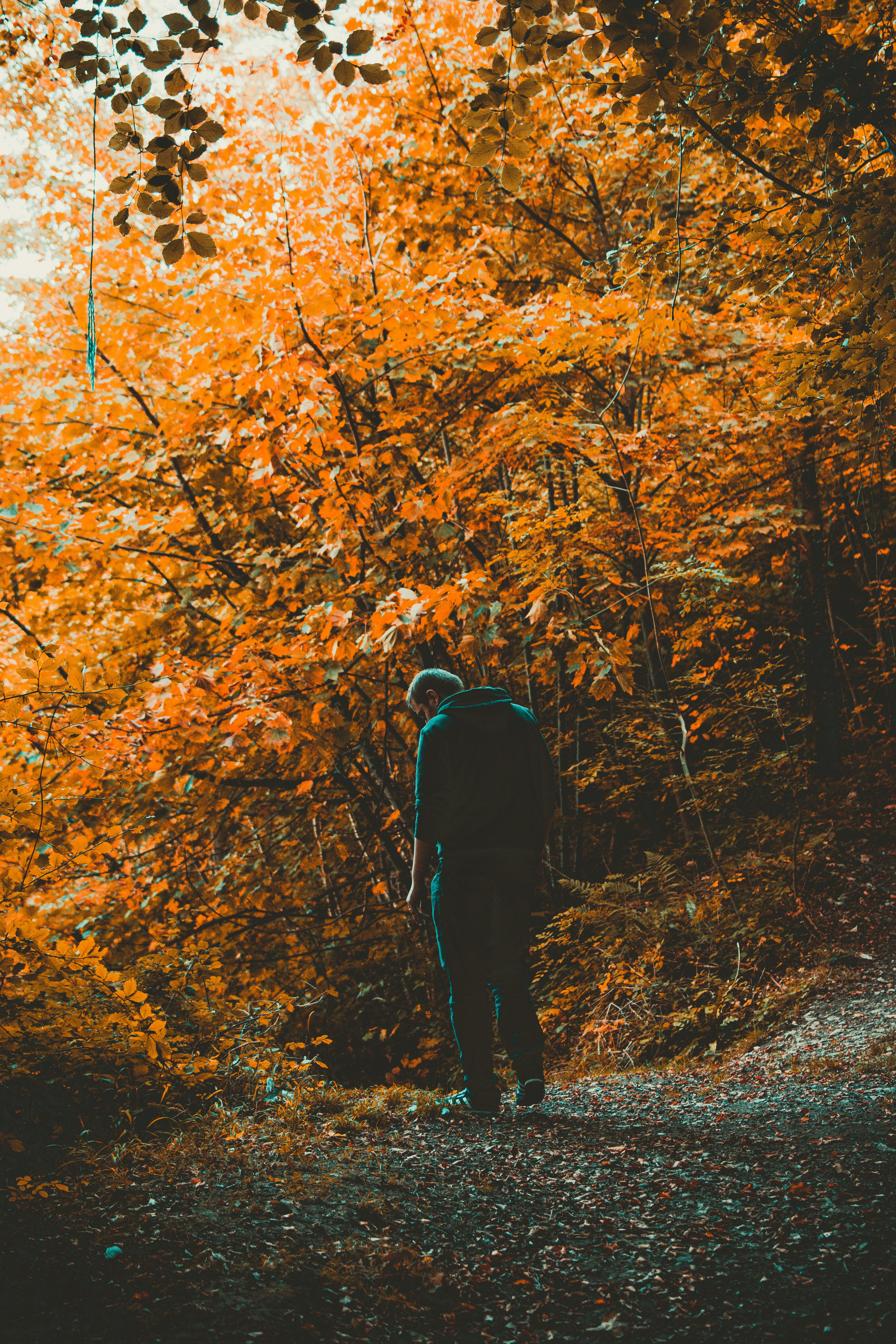 Man Standing on Road Near Trees