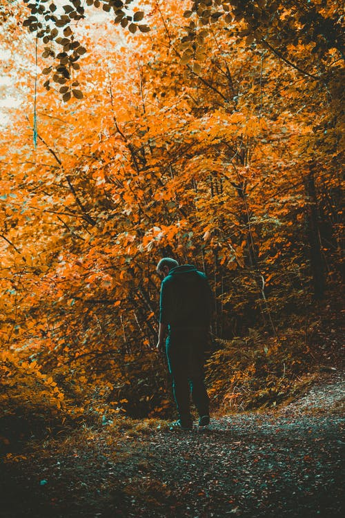 Ilmainen kuvapankkikuva tunnisteilla henkilö, ihminen, lehdet, luonto