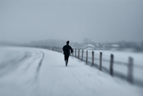 Základová fotografie zdarma na téma černobílá, jistě, zima, zimní pohádka
