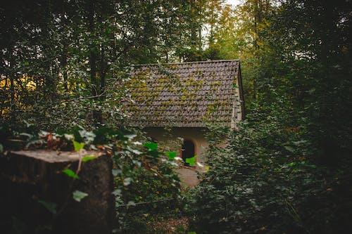 ツタ, 日光, 木, 森の中の無料の写真素材