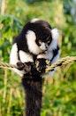 animal, cute, rope