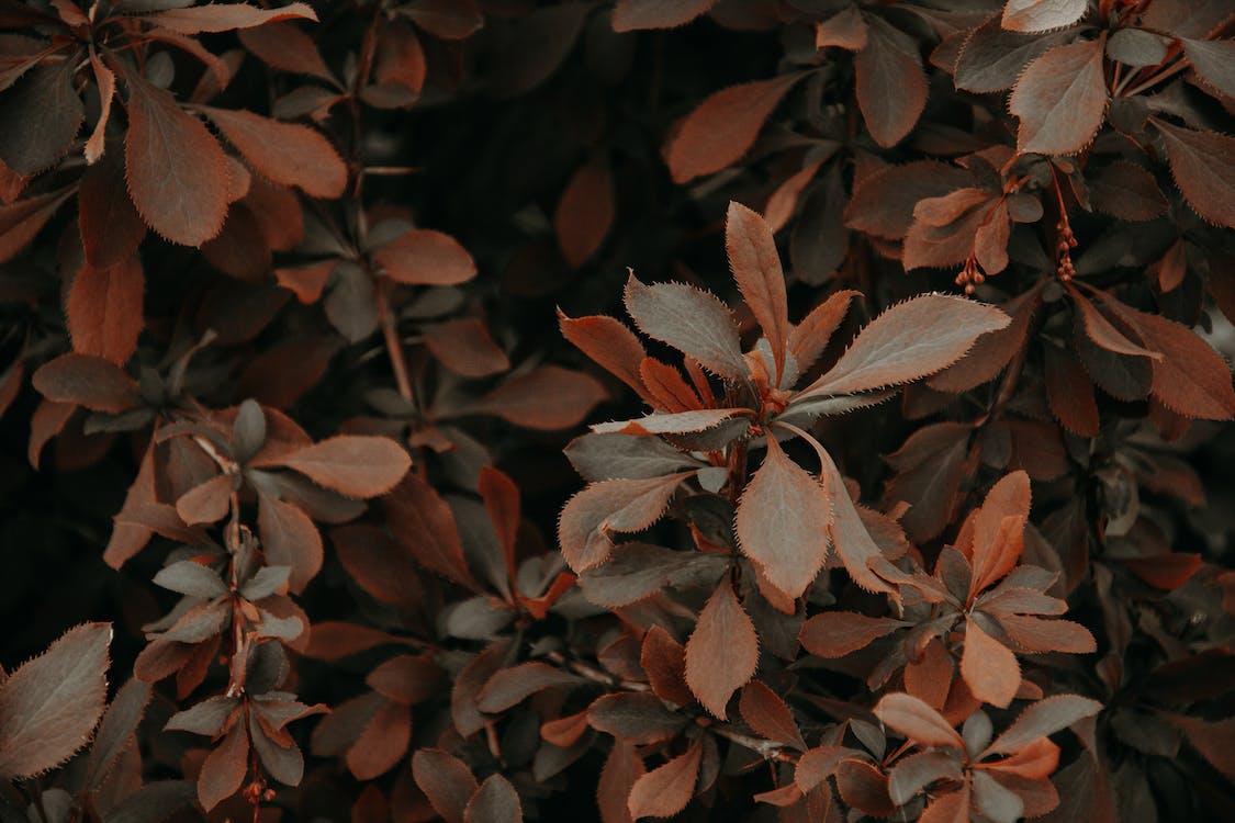Foto d'estoc gratuïta de a l'aire lliure, colors, creixement