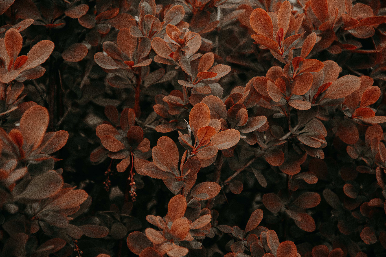 Orange Floral Decor