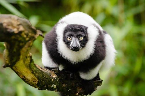 動物, 動物攝影, 原本, 哺乳動物 的 免费素材照片