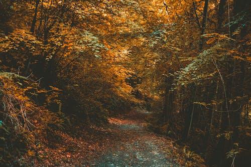 Gratis stockfoto met bomen, Bos, bossen, milieu