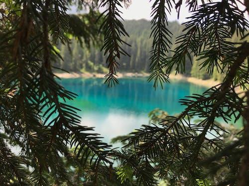 Imagine de stoc gratuită din apă, arbori, crengi, culori
