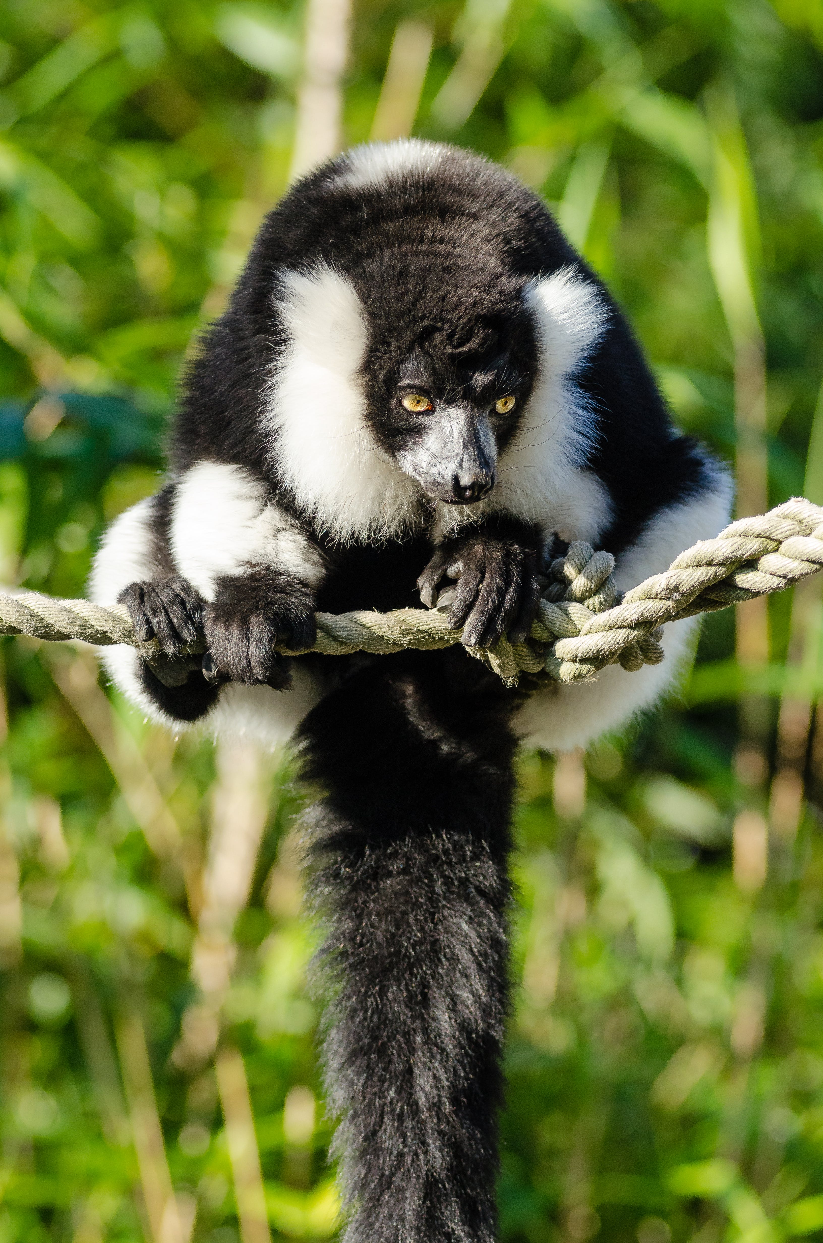 Black and White Animal on the Rope