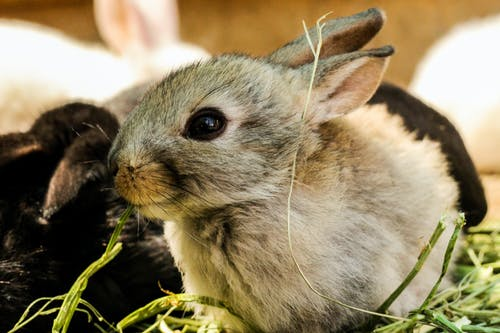 Fotobanka sbezplatnými fotkami na tému cicavec, detailný záber, domáce zvieratá, domáci