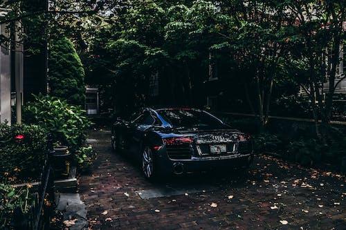 ağaçlar, araba, audi, kara içeren Ücretsiz stok fotoğraf
