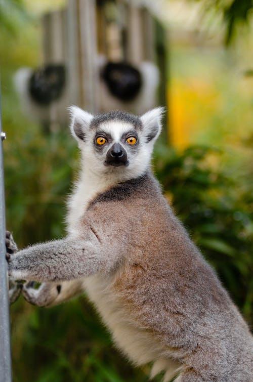 Ingyenes stockfotó állat, állatfotók, elbűvölő tekintet, emlős témában