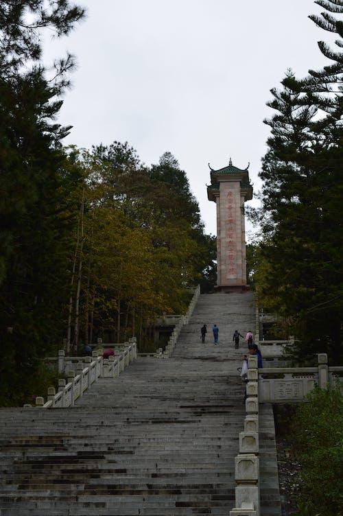 Immagine gratuita di torre