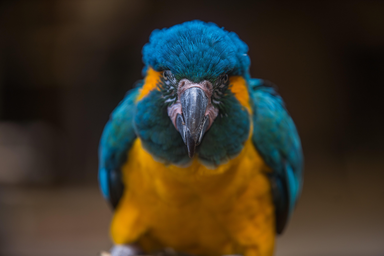 Orange and Blue Macaw Bird
