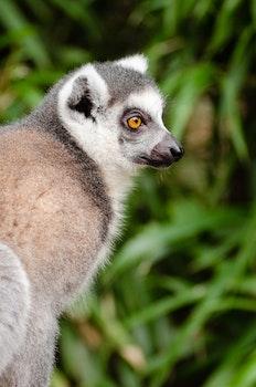 Grey and Black Fur Animal