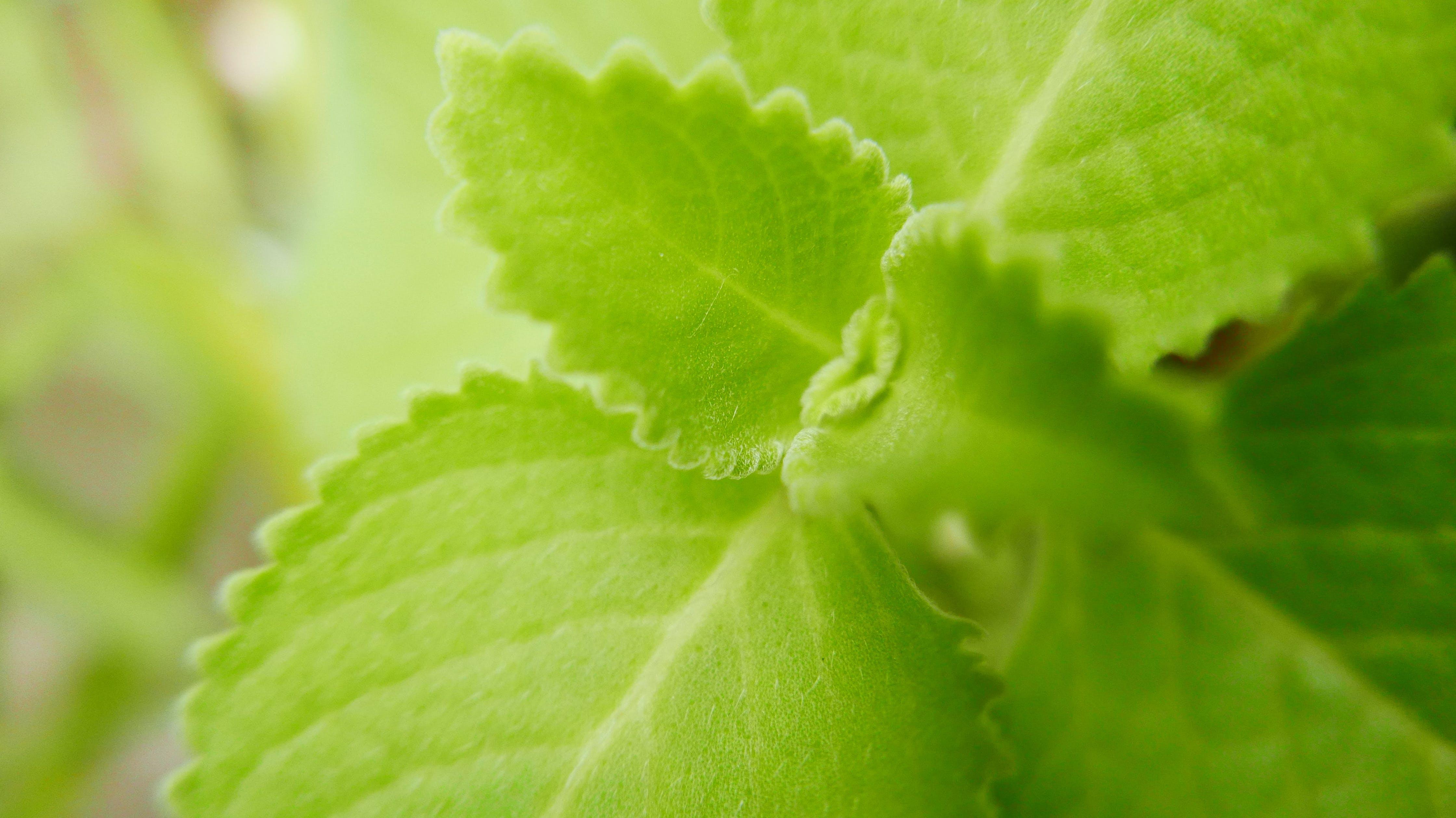 Základová fotografie zdarma na téma alternativní medicína, léčivá rostlina, léčivé byliny, oregano