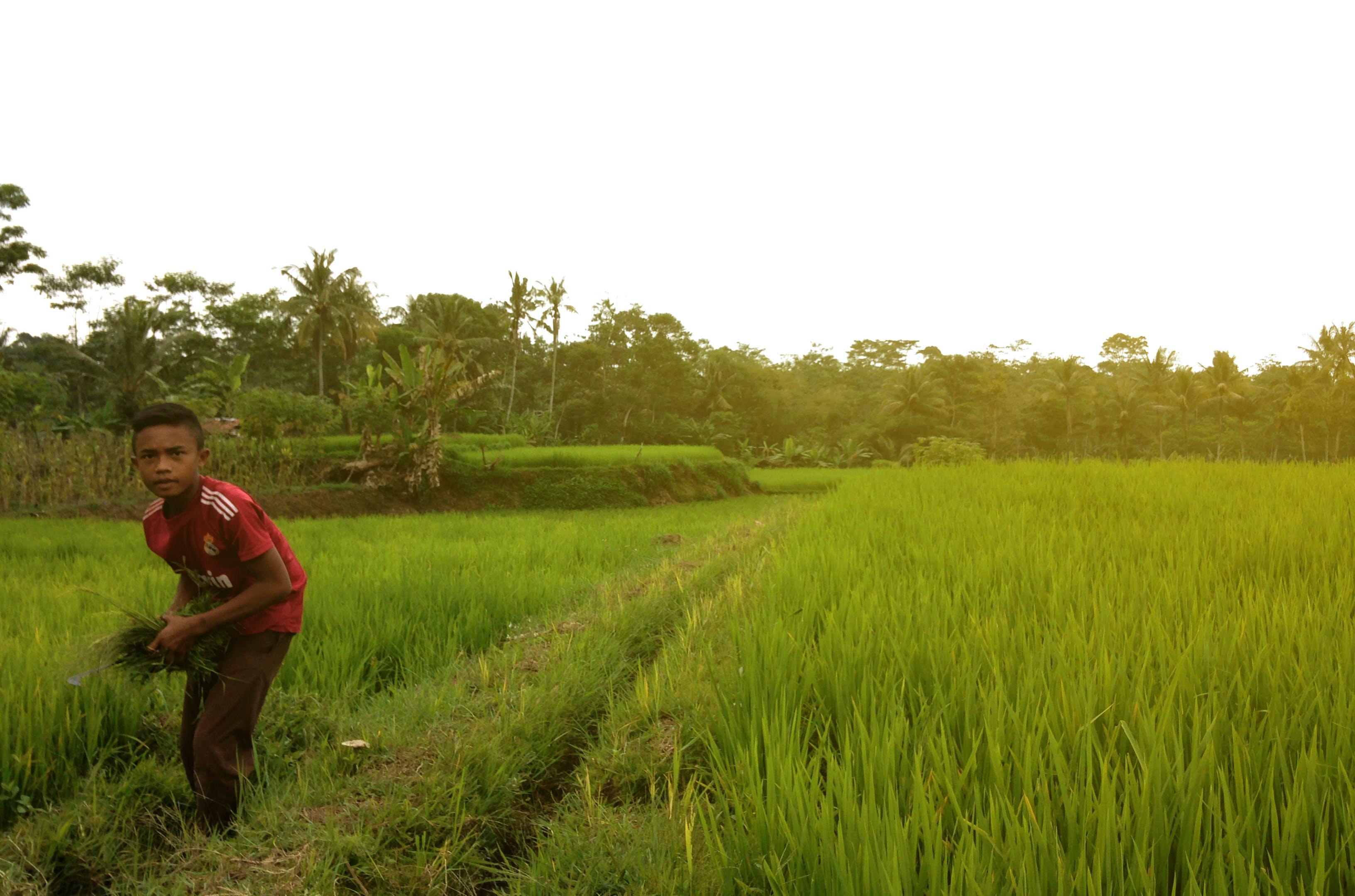 Δωρεάν στοκ φωτογραφιών με αγρόκτημα, γρασίδι, είδα, ζωή
