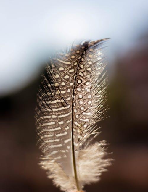 Foto profissional grátis de natureza, pena, pluma