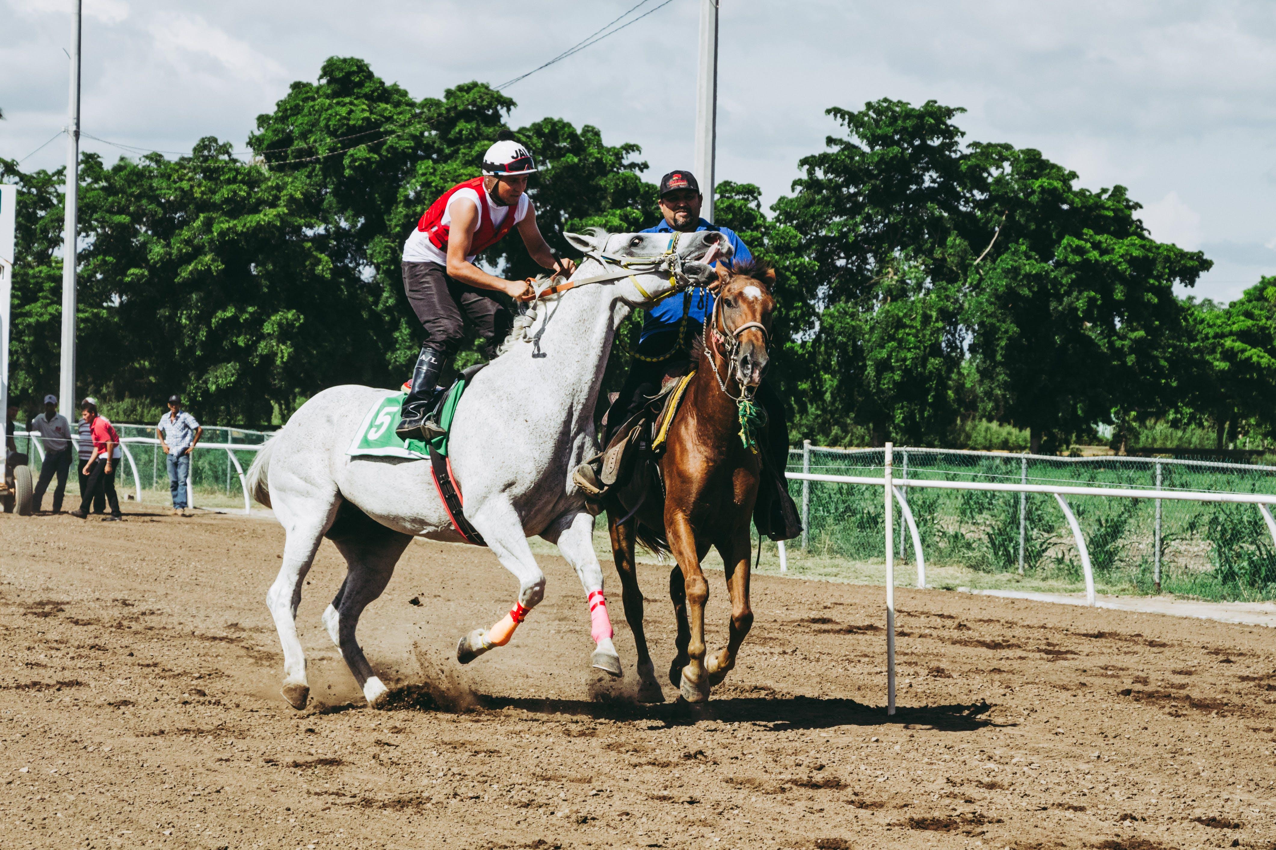 Imagine de stoc gratuită din acțiune, călăreț, călătorie, câmp