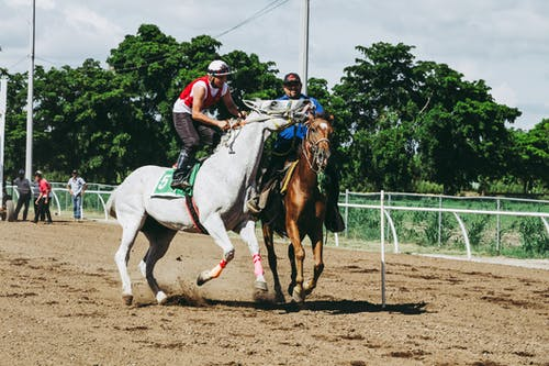 Two White and Brown Running Horses