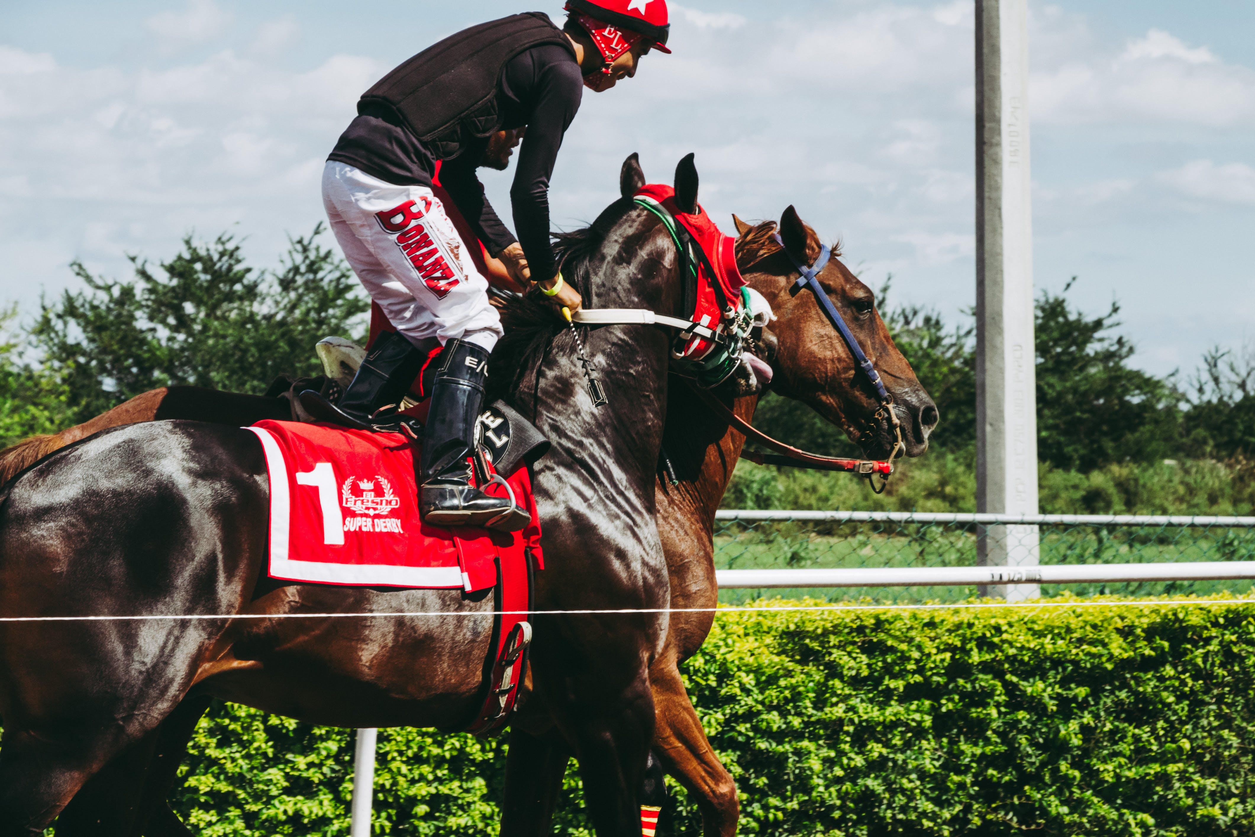 Foto stok gratis balapan kuda, caballo, caballos, hipodromo