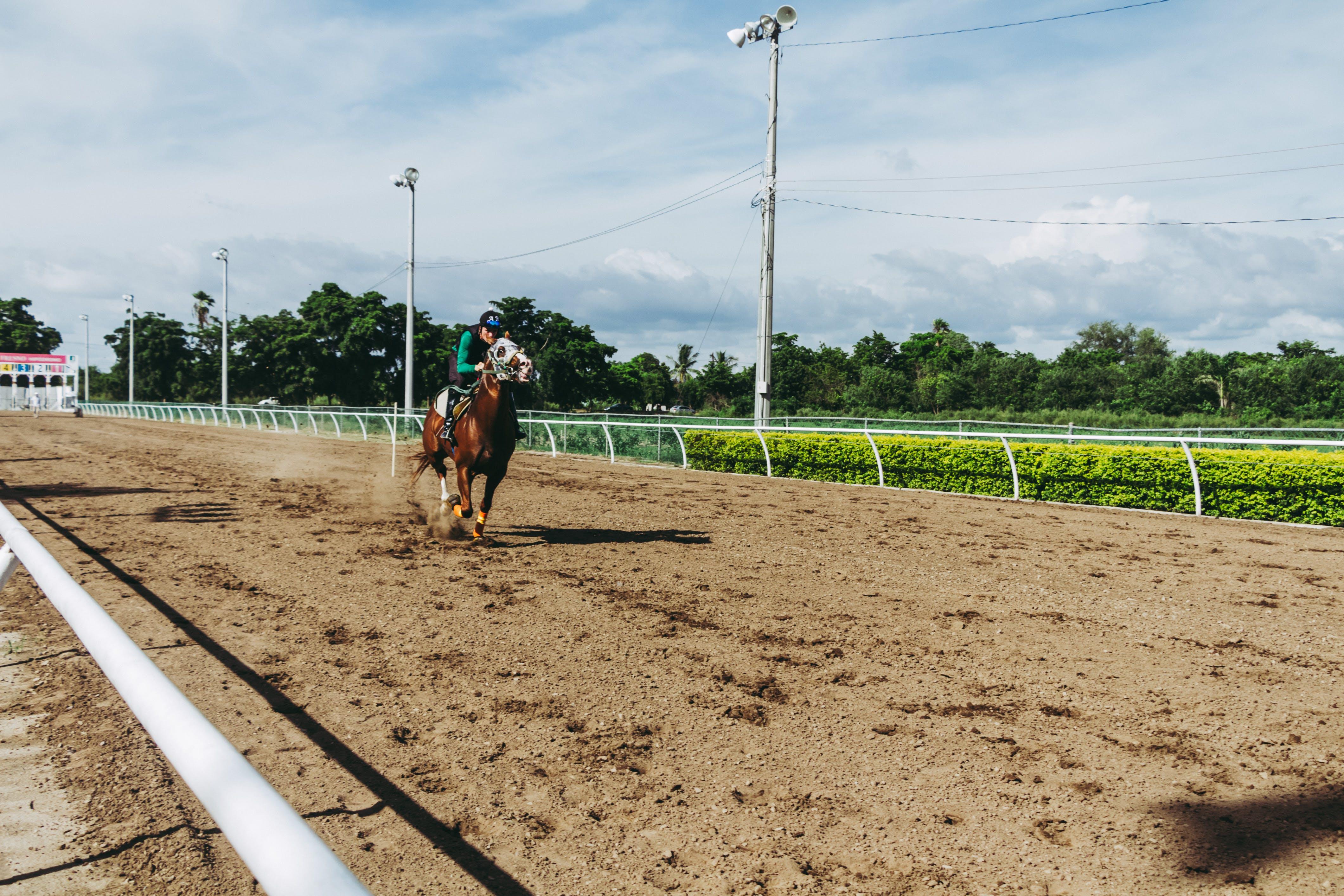 Fotos de stock gratuitas de animal, atracción, caballo, ecuestre