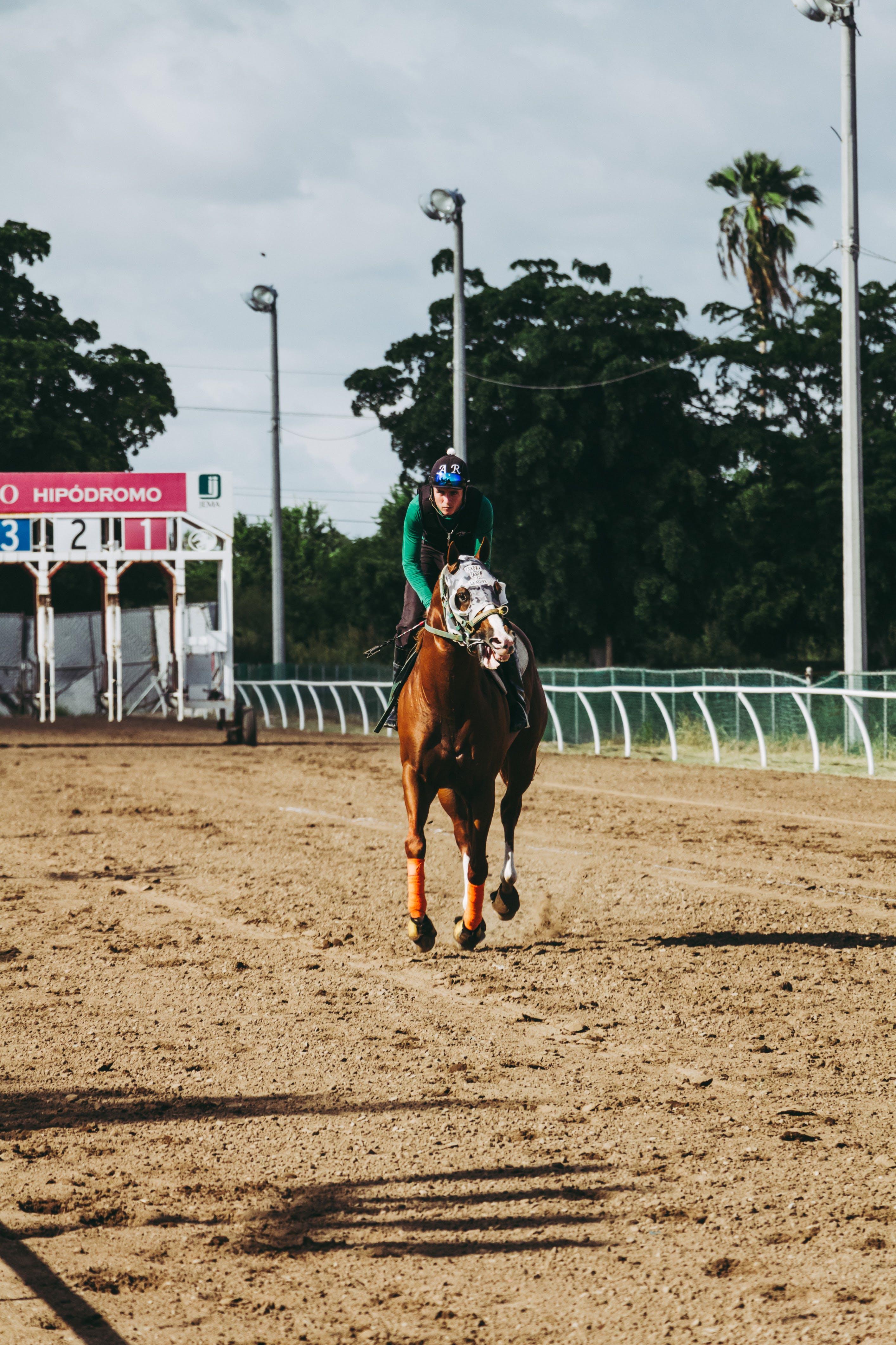 Foto stok gratis atlet, balapan kuda, caballo, caballos