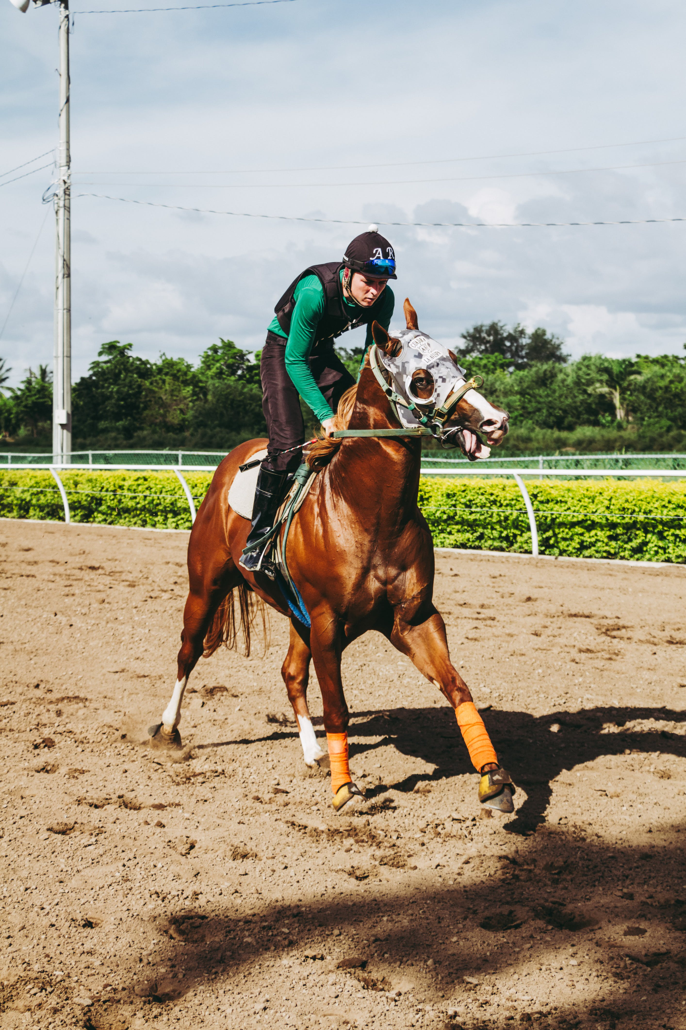 Equestrian Riding Horse on Field