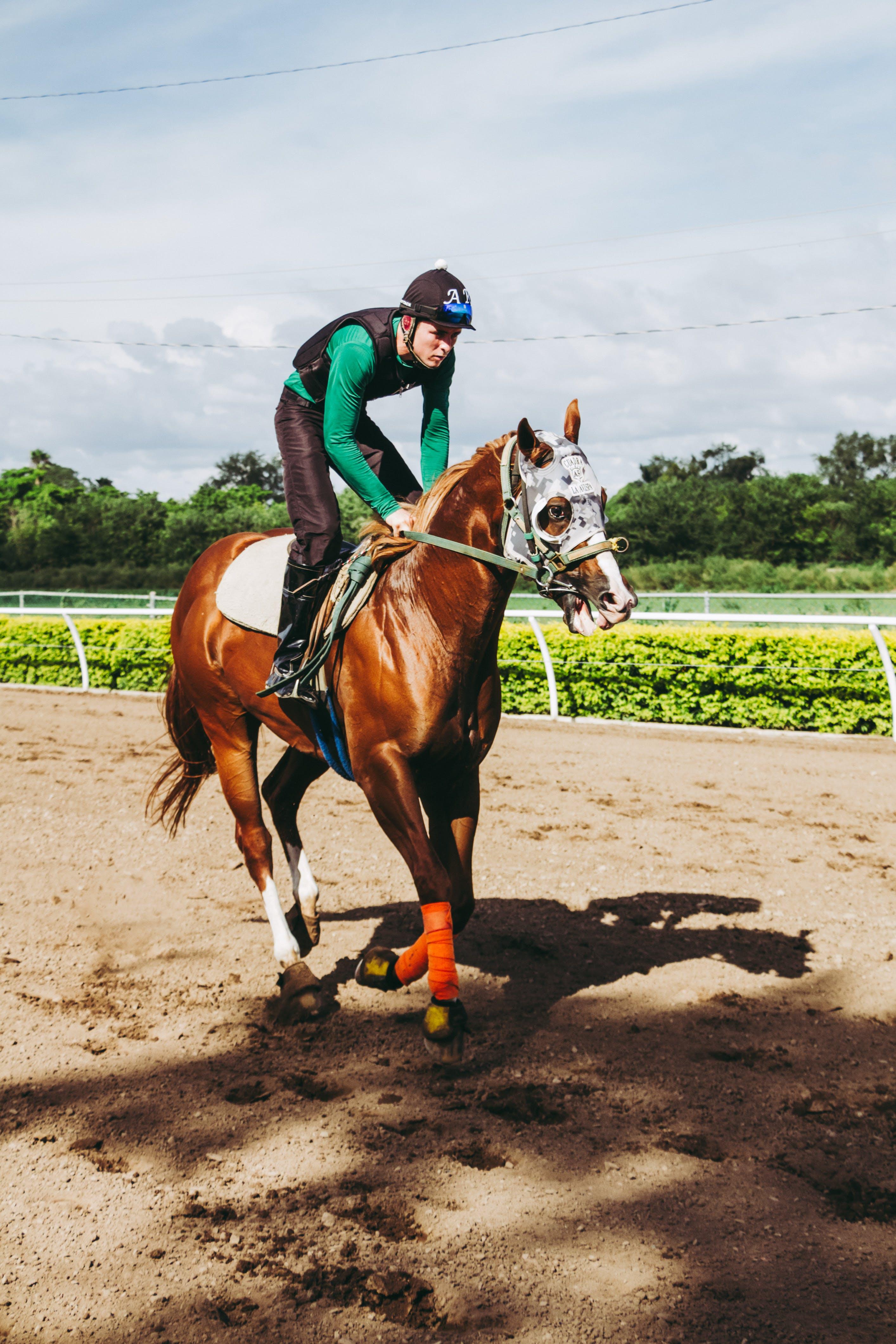 Foto stok gratis atlet, berkuda, bidang, binatang