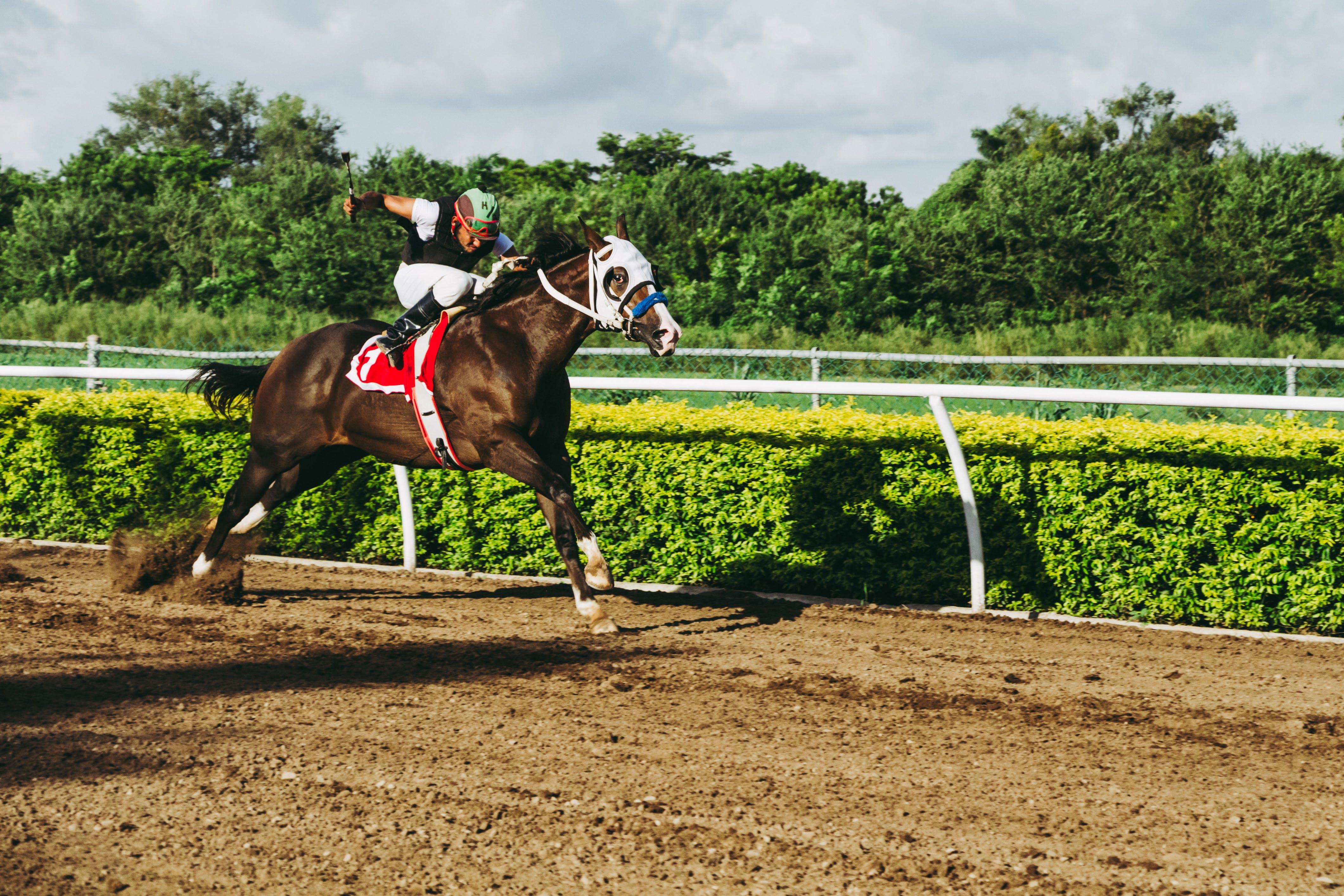 คลังภาพถ่ายฟรี ของ การแข่งขัน, การแข่งม้า, จ๊อกกี้, นักขี่ม้า
