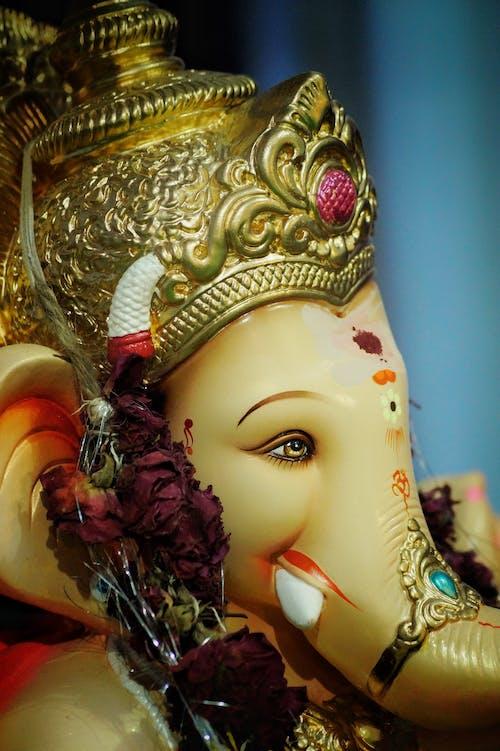Základová fotografie zdarma na téma bůh, festival, ganesh, krásné oči