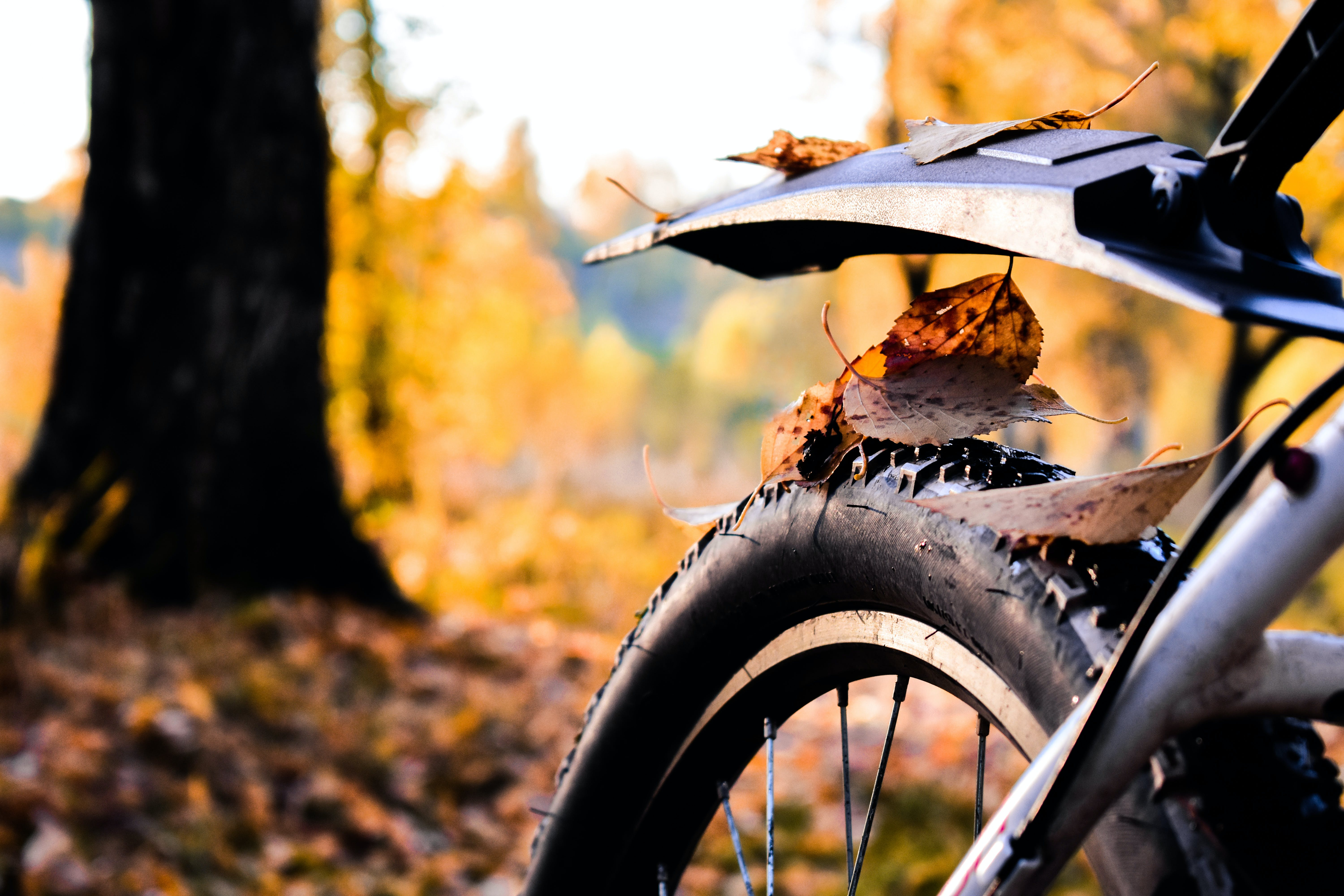Dry Leaves On Bicycle's Tire