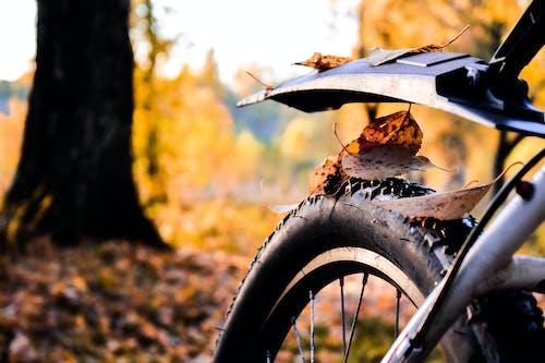 Ingyenes stockfotó abroncs, bicikli, esés témában
