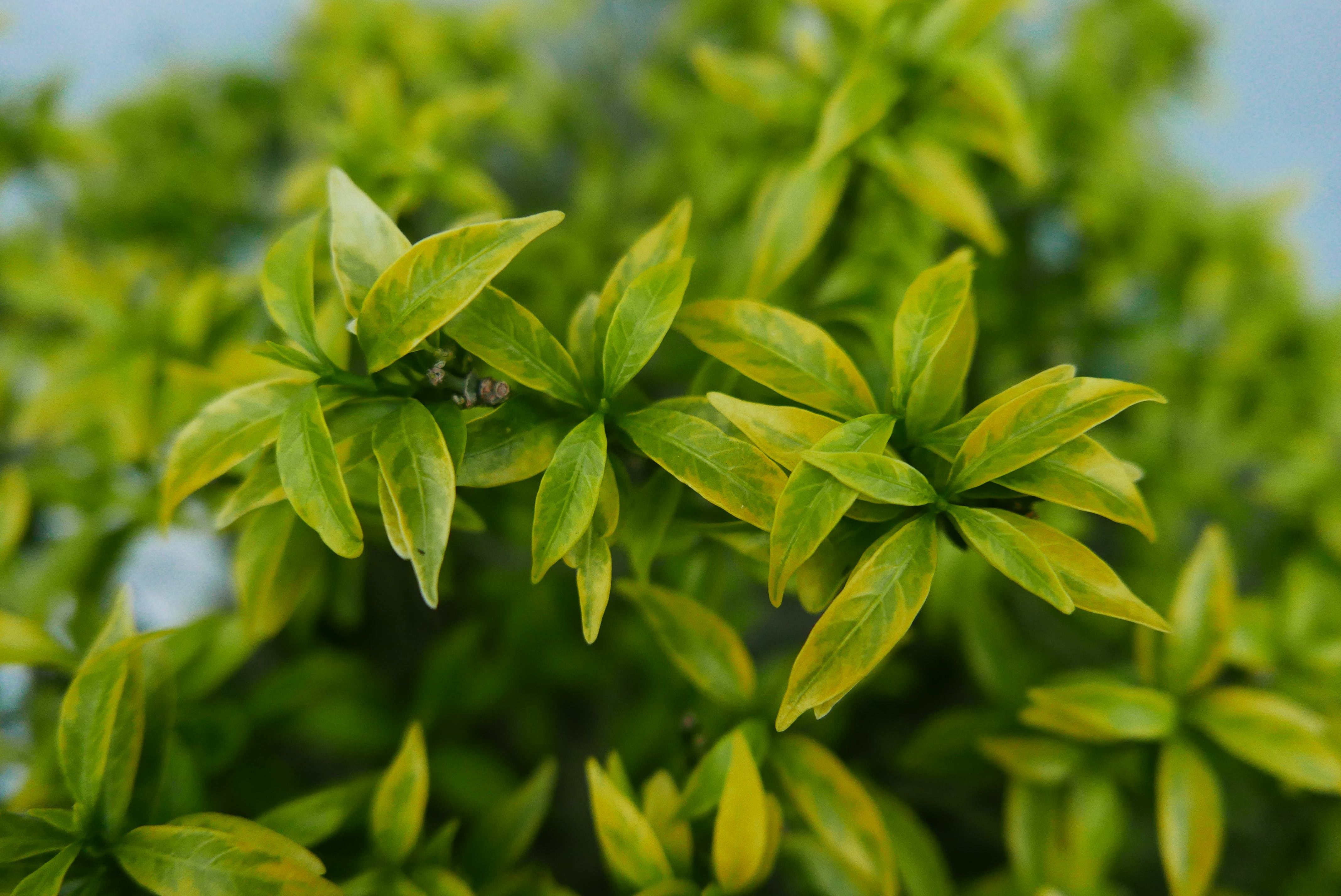 Selective Focus Photography of Green Leafs