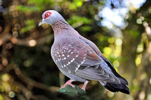 Immagine gratuita di animale, appollaiato, piccione, piume