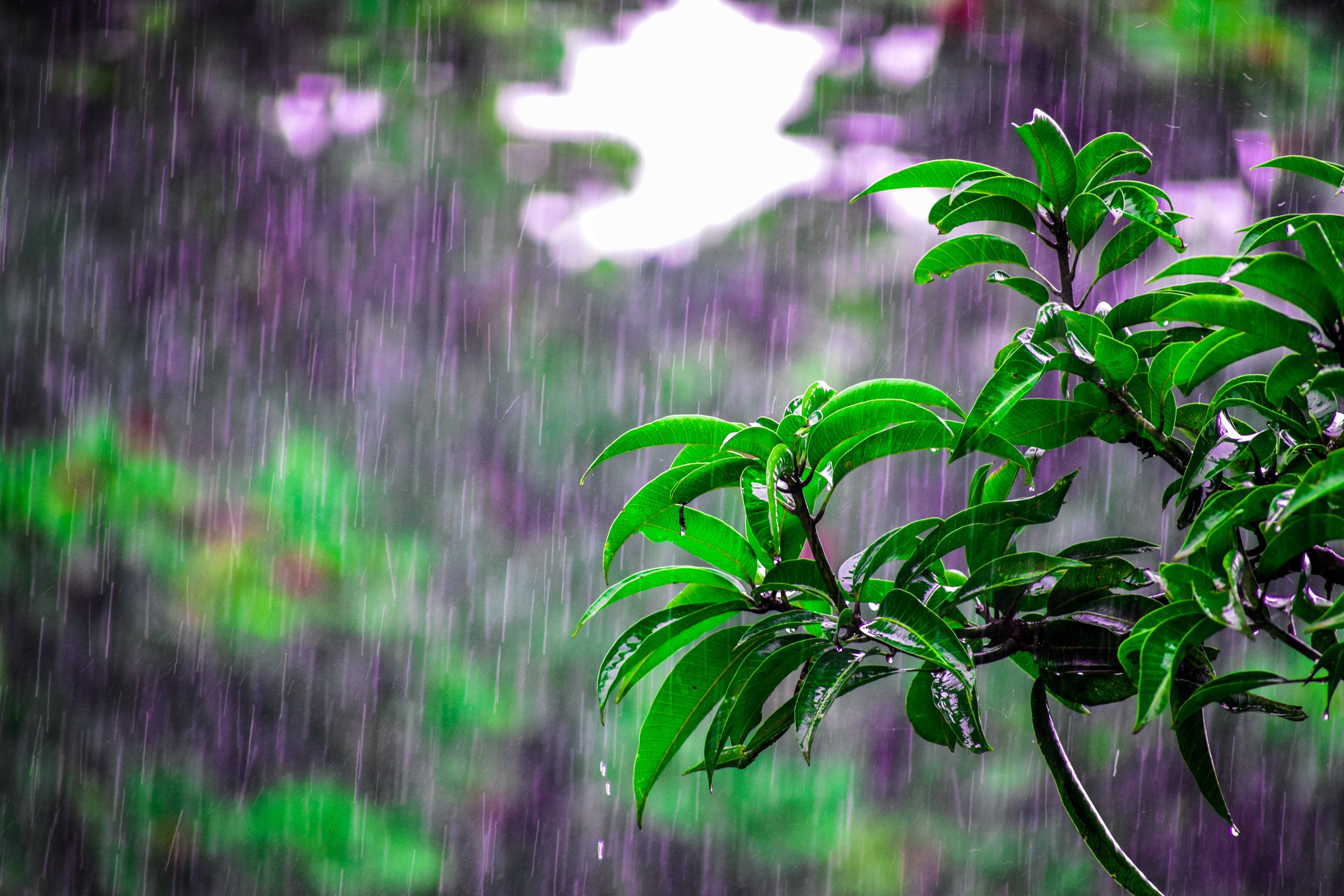 Selective Focus Photo of Obalte Green-leafed Plants during Rain