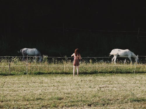 Woman Standing Near Two White Horses on Green Grass Field