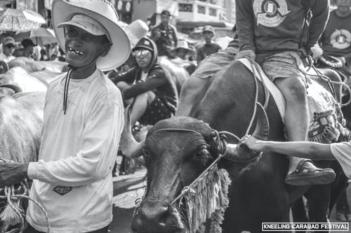 Základová fotografie zdarma na téma carabao, černobílá, festival, úsměv