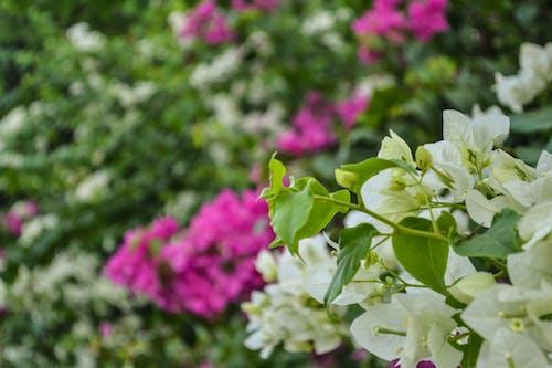 Základová fotografie zdarma na téma květinové pozadí, kytka, pozadí