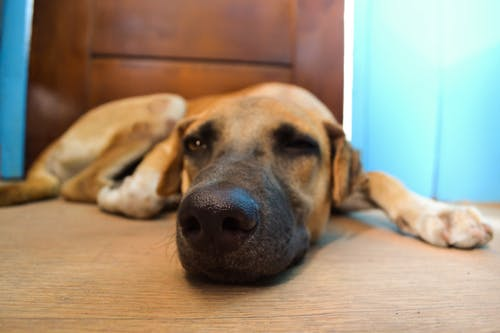Základová fotografie zdarma na téma #dog, hnědý pes, zvíře