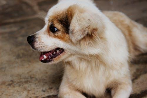 Kostenloses Stock Foto zu haustier, hund, süße tiere, tier