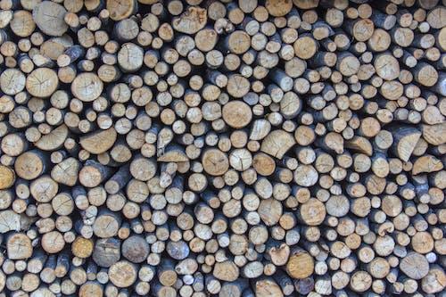 Photos gratuites de beaucoup, bûches de bois