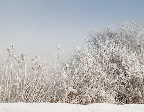 Photos gratuites de blanc, enneigé, gel, hiver