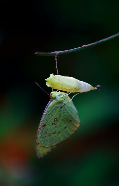 Macro photography of green butterfly on yellow cocoon