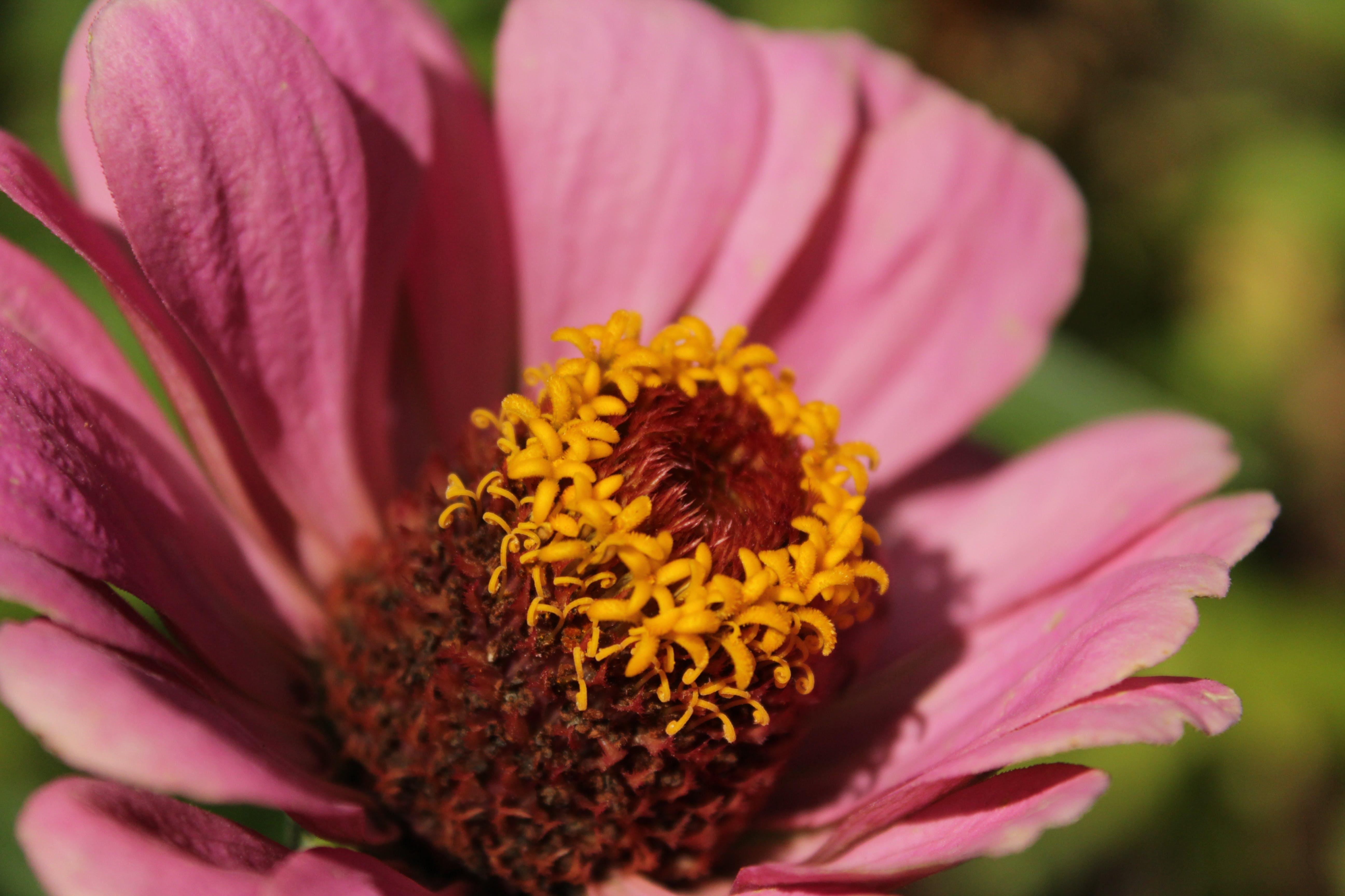 Foto d'estoc gratuïta de flor, foto macro, fotografia macro, groc
